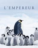 リュック・ジャケ 「皇帝ペンギン ただいま」 元生物学者の監督が4Kカメラやドローンを駆使して南極のペンギンたちを至近距離で撮影