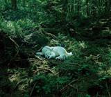 藤原ヒロシ 『slumbers』 YUKIも作詞で参加、前作『manners』から連なる本人歌唱のアルバム
