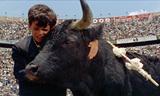 『黒い牡牛』 少年と牛の絆を描いた物語を、鮮やかなカラー映像と華麗な音楽が彩る
