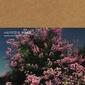 見汐麻衣がピアノと歌う。〈ひきがたり〉シリーズ第5弾をMISHIO Recordsからリリース