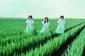 Negicco『Negicco 2011〜2017 -BEST- 2』 KIRINJIやHomecomingsとの新曲も最高すぎるTパレ移籍後のベスト・アルバム!