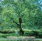 本島阿佐子、山下洋輔 『Melodier of Memories』 輝かしい実績を持つソプラノ歌手の3作目は山下洋輔とのコラボで日本歌謡に挑戦