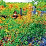 ジェネイ・アイコ 『Trip』 カシミア・キャットらが手掛けた曲も、サプライズ発表された幻想的なムードの新作