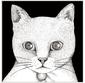 テンテンコ 『ALL YOU NEED IS CAT〜猫こそはすべて』 川本真琴やKERA、neco眠るらと猫ソングをカヴァー!