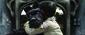 ウェス・アンダーソン『犬ヶ島』 ウェスの日本好きがこんなに美しいストップモーション・アニメになった